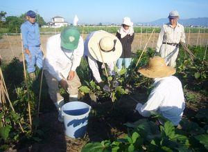 前年度の有機農業研修の参加者