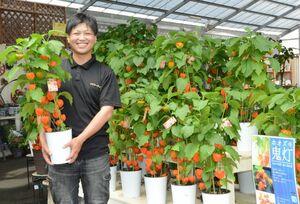 夏の風物詩ホオズキは、佐賀県産で唐津市七山の生産者から仕入れているとのこと。黒田淳也専務は「今年は特に、実付きが多く、色味もきれいです」と太鼓判を押します