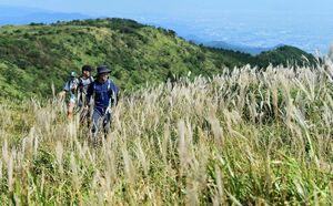 秋風に揺れるススキの中を歩く登山者=小城市小城町の天山山頂付近