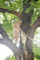 大イチョウから麻の神旗を回収する男衆=みやき町原古賀の綾部八幡神社
