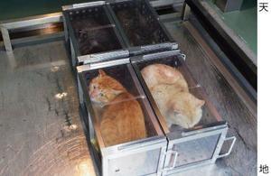 動物愛護管理センターで殺処分のため、容器に入れられた猫=2015年、山口県下関市