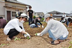サツマイモの苗を植える日本語学校の学生たち=鳥栖市