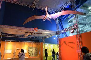 翼を広げたプテラノドン(手前)の模型とアンハングエラ(奥)の化石のレプリカ=武雄市の佐賀県立宇宙科学館