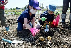 土を掘って大きなジャガイモを見つけた子どもたち=佐賀市巨勢町