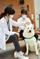 セラピー犬と触れ合うマリエッタの社員=佐賀市呉服元町の656広場