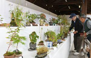 会員が大切に育てた山野草の約350鉢が並ぶ=佐賀市松原の佐嘉神社境内