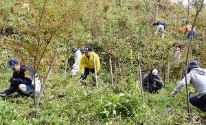 草を刈り取るなど懸命に除草作業をする参加者たち=佐賀市富士町