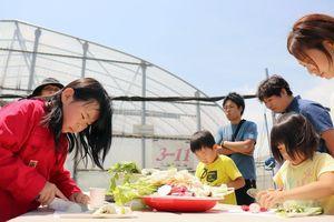 収穫した新鮮な野菜をサンドイッチの材料として切り分ける参加者=みやき町のサガンベジ