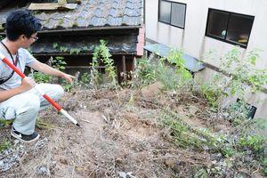 盗掘目的とみられる多くの穴が掘られていた山小屋窯跡=西松浦郡有田町中樽