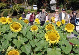 棚田に10万本のヒマワリが咲き誇る「山田ひまわり園」=みやき町簑原