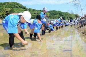 新嘗祭に献上する米の苗を植える五町田小児童=嬉野市塩田町の石垣地区