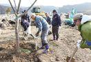 伐採予定の桜並木再生、185本を移植