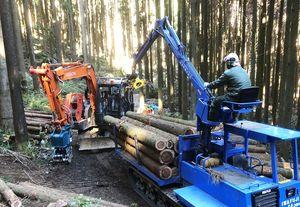 県内有数の銘木「多良岳材」の出荷作業。枝打ちや間伐など管理が行き届く=太良町