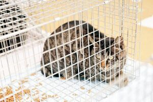 上峰町内で保護された猫。不妊・去勢手術を施して、再び放たれる