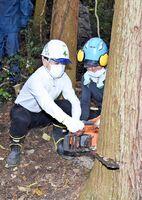 チェーンソー使って木を切り倒す武広勇平町長と佐藤英社長=上峰町の鎮西産近く