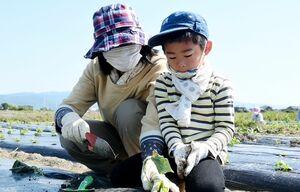 サツマイモの苗を植える親子=佐賀市巨勢町