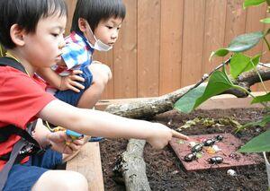吉野ケ里歴史公園の「カブトムシハウス」で、カブトムシを間近で観察する子どもたち=同公園