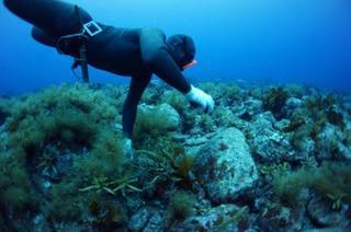 輪島の海女漁など6件指定