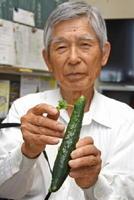 冨永寅雄さんが栽培していたキュウリから葉っぱが生えた