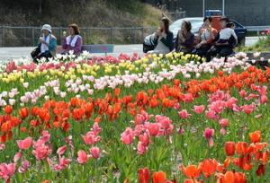 陽気の中、ソフトクリームを手にチューリップを観賞する花見客=佐賀市大和町今山のチューリップ畑