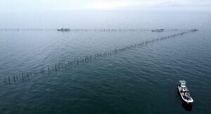 一辺200メートルの竹羽瀬。V字の先端に網を仕掛ける