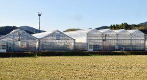 最新のハウスが並ぶ武雄市のトレーニングファーム。園芸団地も同様に施設を集中して整備し、就農者に貸し出す予定だ=武雄市朝日町