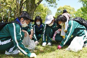 芝生をかき分け、メリケントキンソウを抜き取る生徒たち=佐賀市の佐賀県立森林公園