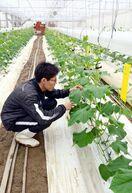 <農業振興 果敢に挑戦-さが園芸888運動>(上)先細り…