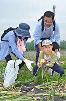 タマネギの収穫を体験する親子連れ=佐賀市東与賀町