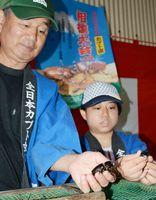 太良町の佐賀西部コロニーで出荷が始まったカブトムシ