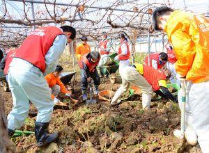 ハウスのブドウ園から粘土質の泥をかき出す作業に当たる佐賀農業高の生徒ら=27日、福岡県朝倉市杷木
