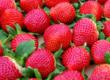 名前は「いちごさん」 佐賀県産イチゴの新品種