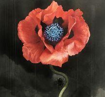 池田学さん「Flower01」(水彩、インク、色鉛筆・20・3センチ×22・2センチ)