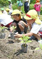 虫発見!ヒマワリの苗植えではしゃぐ嘉瀬保育園の園児たち=佐賀市の県立森林公園