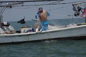 流し刺し網でサメを引き揚げる小山さん=4月8日正午ごろ、早津江川河口沖