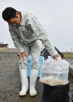 ウミタケ稚貝18.6万個移植 早…