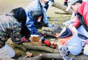 ほだ木に種駒を打ち込む参加者=伊万里市二里町の神之原八幡宮