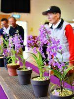 かれんな花を咲かせるクロカミラン=伊万里市の大坪公民館