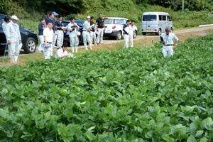 1トンどりプロジェクトの試験ほ場を視察し、大豆の生育状況を確認する県やJAの担当者=30日、武雄市若木町