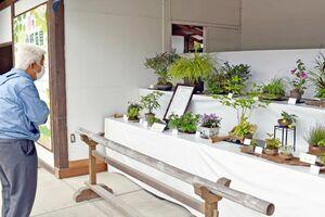 はがくれ山草会の春の山野草展で、並んだ作品=佐賀市の佐嘉神社
