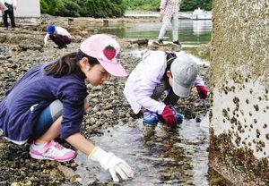 浅瀬で生き物を探す子どもたち=唐津市呼子町の弁天島周辺