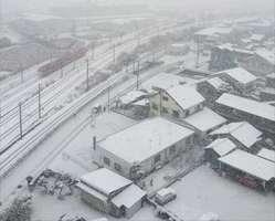 雪が降りしきる鳥栖市内。一面が真っ白に染まった=6日午前7時20分ごろ、鳥栖市東町