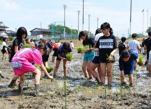 稲文字の田植えに挑戦する児童たち=上峰小横の体験田