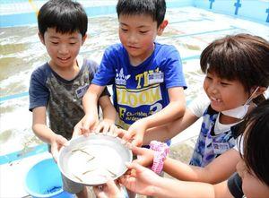 皿に入ったカスミサンショウウオ=唐津市鎮西町の名護屋小