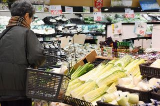 野菜の高値いつまで続く? 白菜2倍、レタス1.9倍