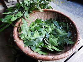 葉は陰干しして、料理の風味づけに