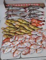 80センチ超のマダイを筆頭に、根魚、レンコダイなど上々の釣果となった=長崎県壱岐市