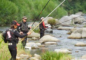 アユの友釣りを楽しむ人たち=15日朝、唐津市の玉島川