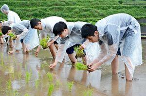 雨交じりの中、横一列に並んで苗を植える生徒たち=有田町岳の棚田