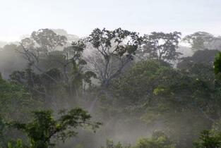 生態系保護へ8兆ドルの投資必要